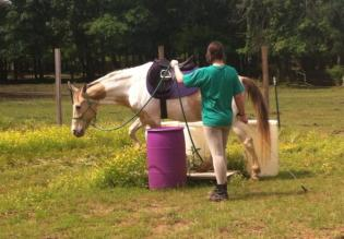Mocha has a lot of training: ground school (as we see here), jumping, dressage--you name it, Mocha can probably do it.
